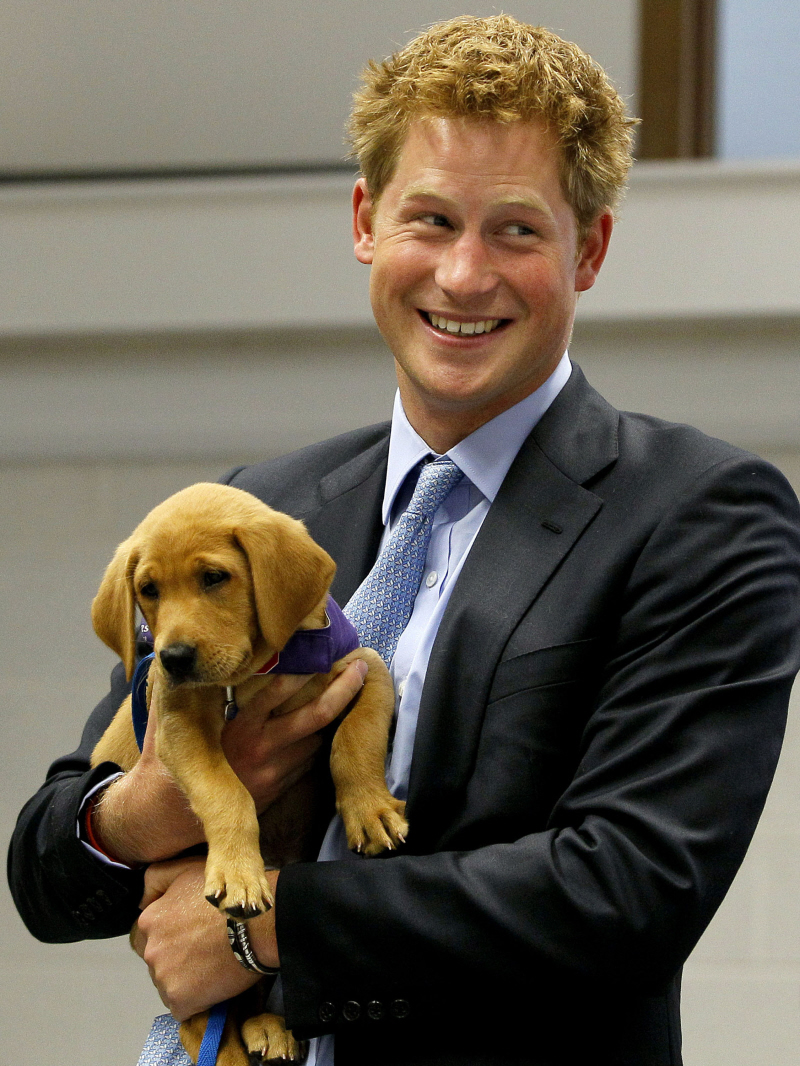 Prince Harry and a puppy. You're welcome.